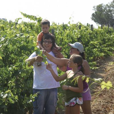 Mujer y niños en una viña del municipio de Calonge (Ajuntament de Calonge)