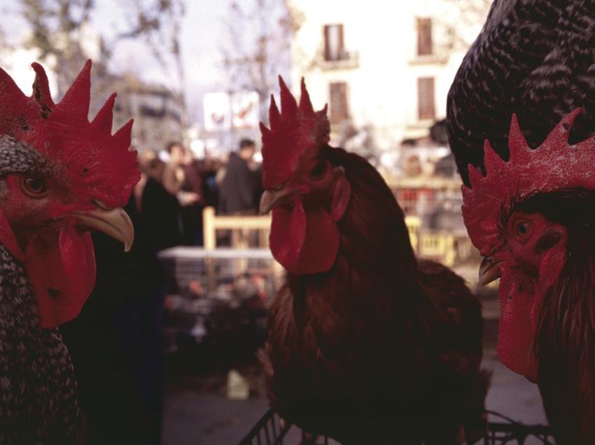 © Vilafranca del Penedès
