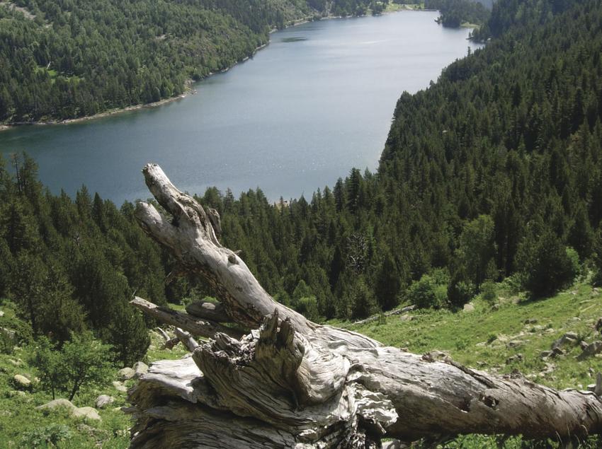 Soca amb un paisatge pirinenc al fons.