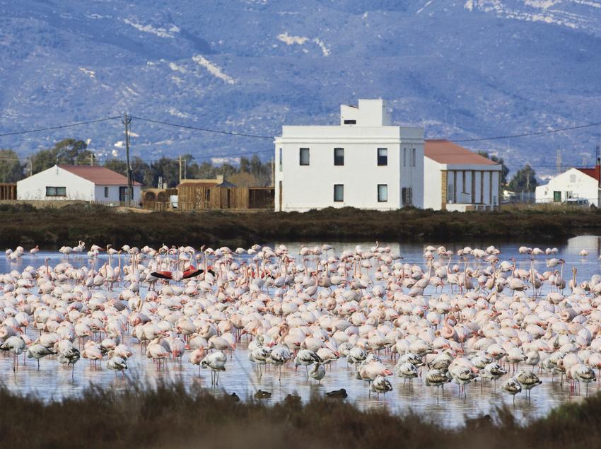 Grup de flamencs al Delta de l'Ebre. (Fundació Catalunya-La Pedrera)