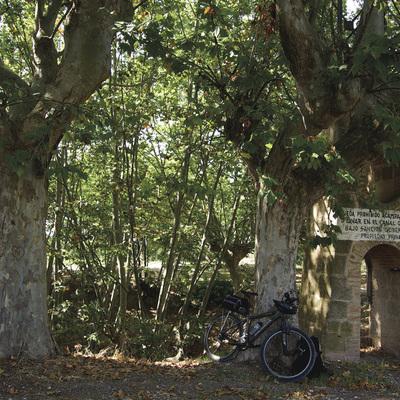 Camí forestal a Mollerussa