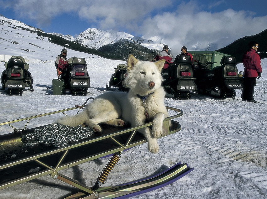 Trineo de perros en el Pla de Beret.  (Turismo Verde S.L.)