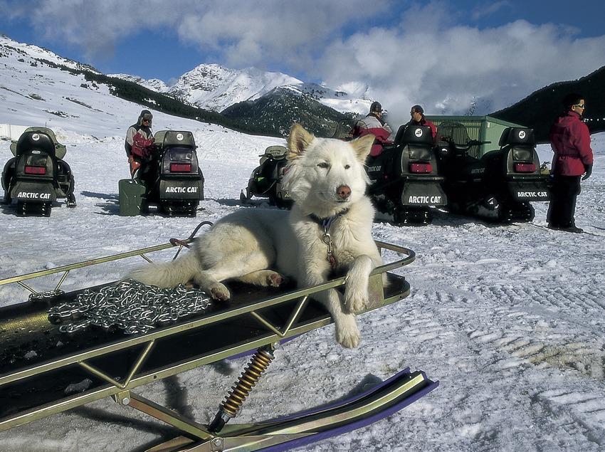 Trineu de gossos al Pla de Beret. Múixing.  (Turismo Verde S.L.)