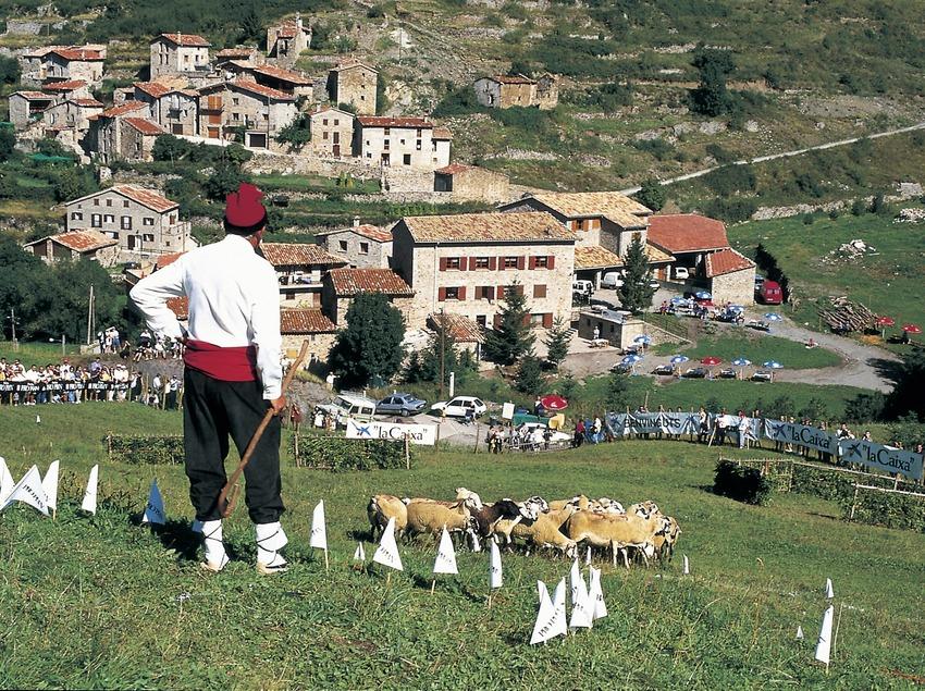 Concurs de gossos d'atura a Castellar de n'Hug.  (Turismo Verde S.L.)