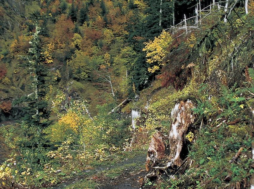 Ombrèr e Pupelat forest, Arres  (Turismo Verde S.L.)