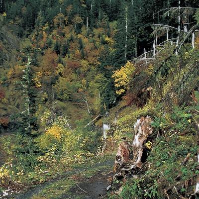 Bòsc Ombrèr e Pupelat, Arres.  (Turismo Verde S.L.)