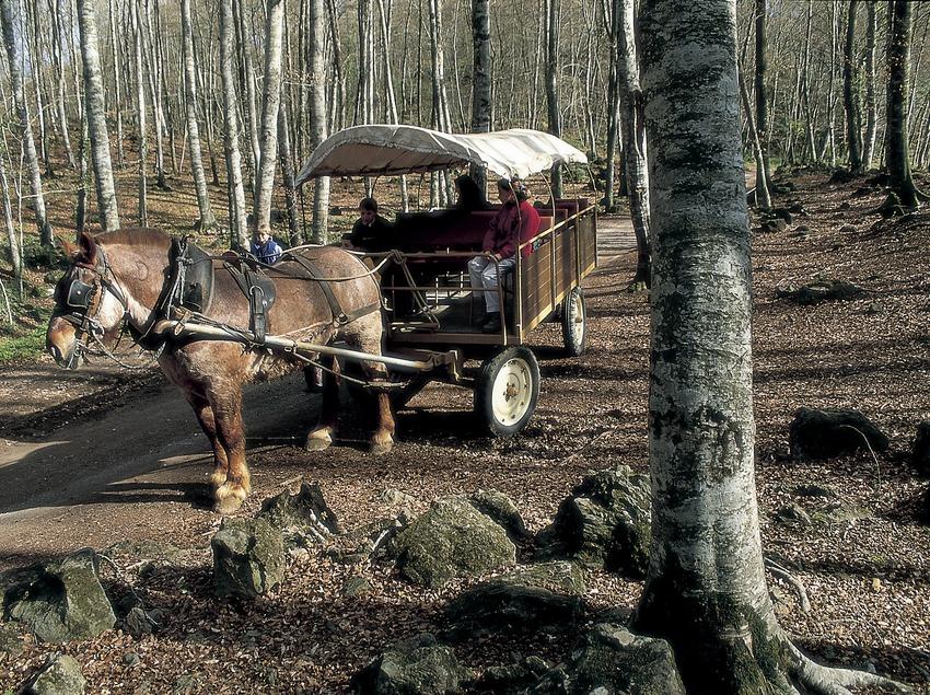 A carriage ride in La Fageda d'en Jordà