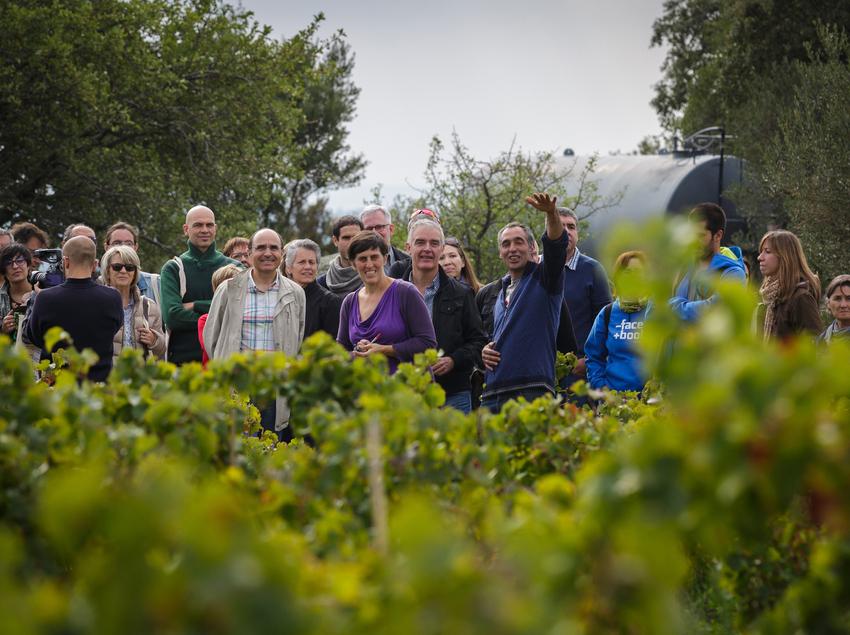 Visita guiada por la bodega y las viñas de Can Torres.