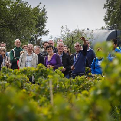 Visita guiada pel celler i les vinyes de Can Torres.