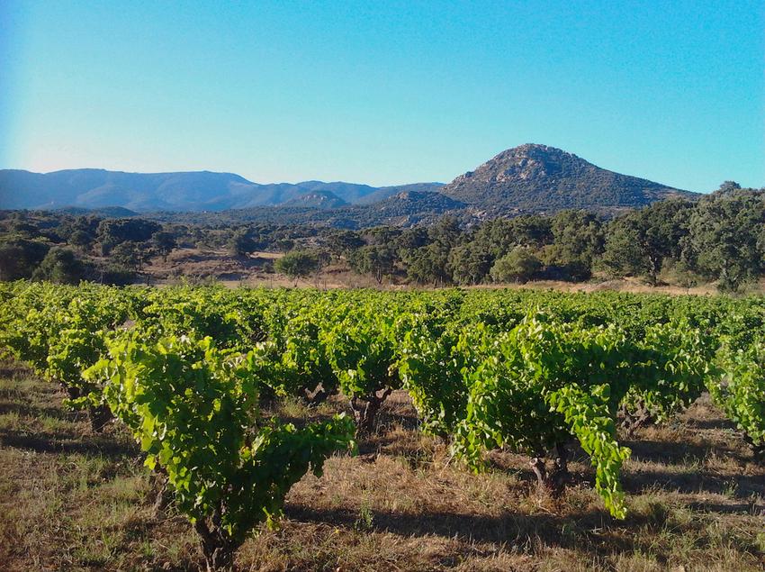 Vinya de Can Torres.