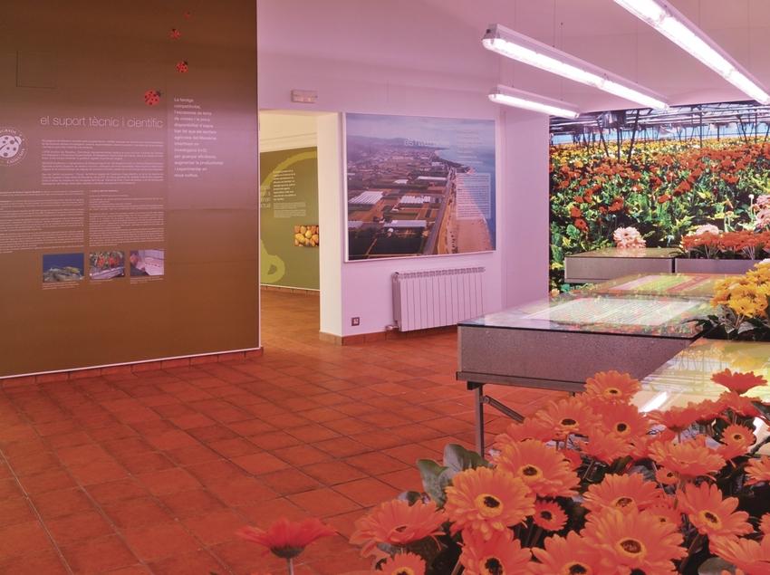 Flores en una sala del museo.