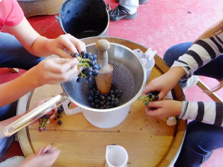 El misteri de la vinya