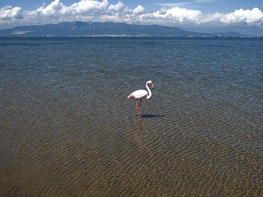 Playa de Riumar con un flamingo