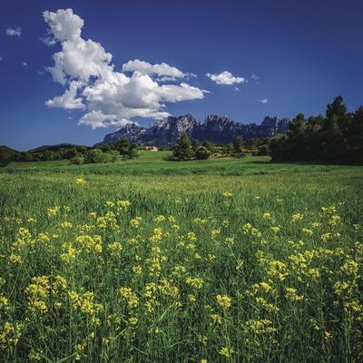 El massís de Montserrat s'albira amb un perfil ben característic des del pla de Bages, que llueix especialment amb l'arribada de la primavera