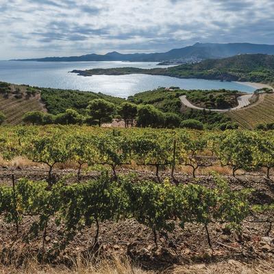 Castillo Peralada, finca Garbet con viñedos cerca del mar, playa Garbet, Llançà y Cap de Creus de fondo.