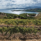 L'Empordà. A sea of wines between the coast and the Pyrenees