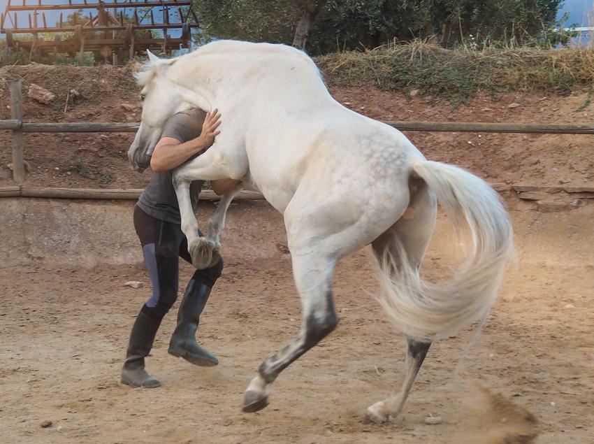 Experiencias con caballos