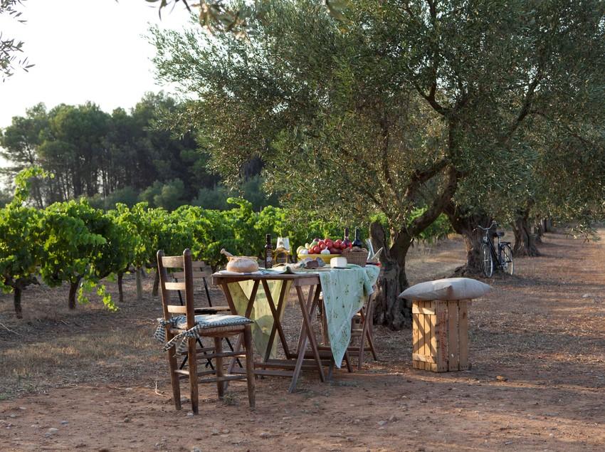 Cata de productos locales en el olivar al atardecer