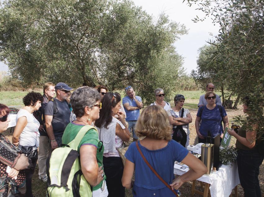 Visita guiada por el olivar