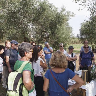 Visita guiada per l'oliverar