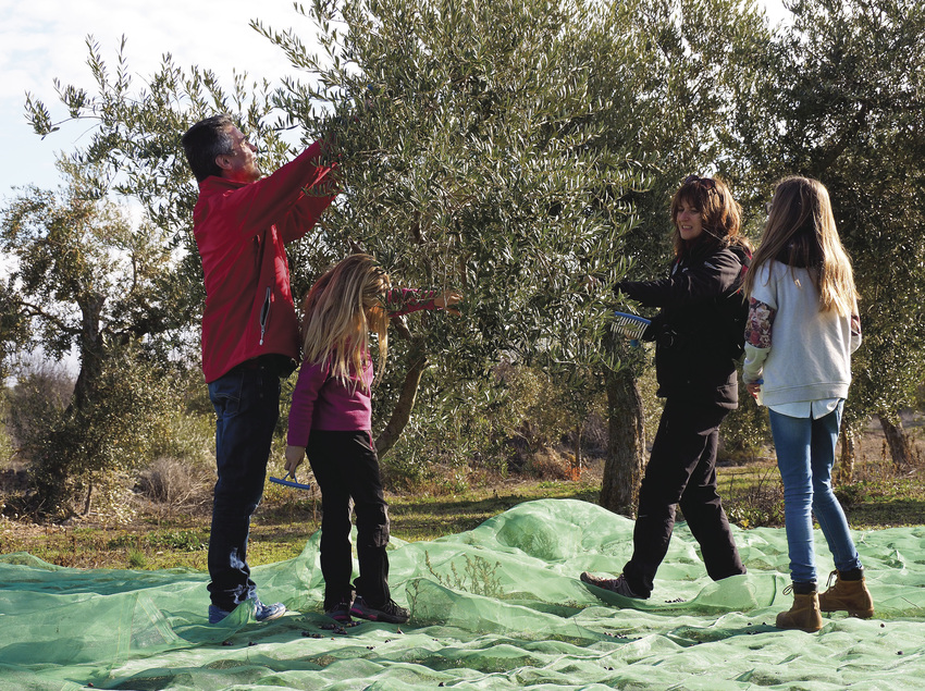 Collint olives al tros.