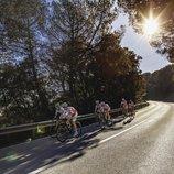 Grup de ciclistes descendint per la carretera