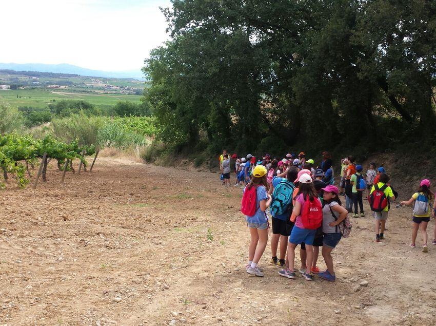Grupo de escolares haciendo una excursión