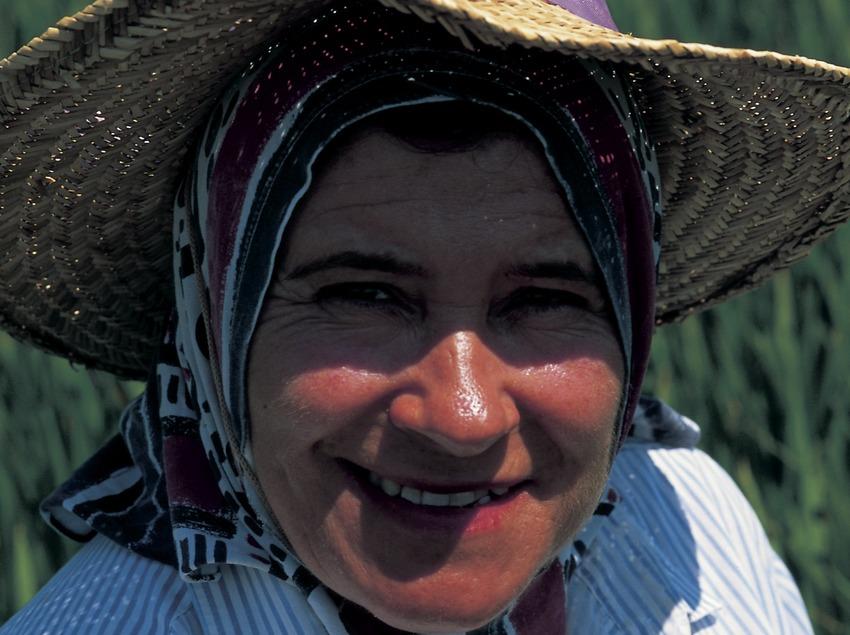 Arrossaire al Parc Natural del Delta de l'Ebre. (Oriol Llauradó)