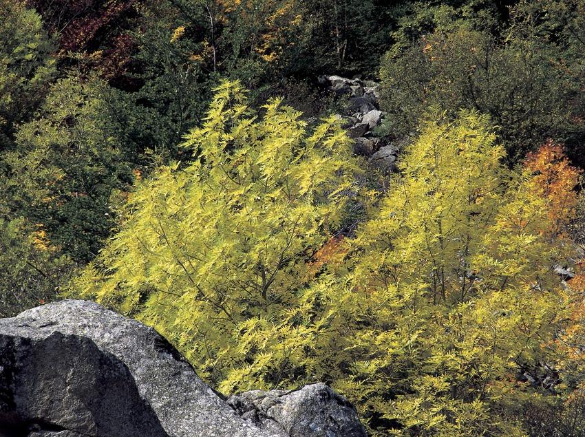 Paisatge pirinenc prop de la presa de Cavallers.  (Kim Castells)