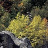 Paisaje pirenaico cerca de la presa de Cavallers.  (Kim Castells)