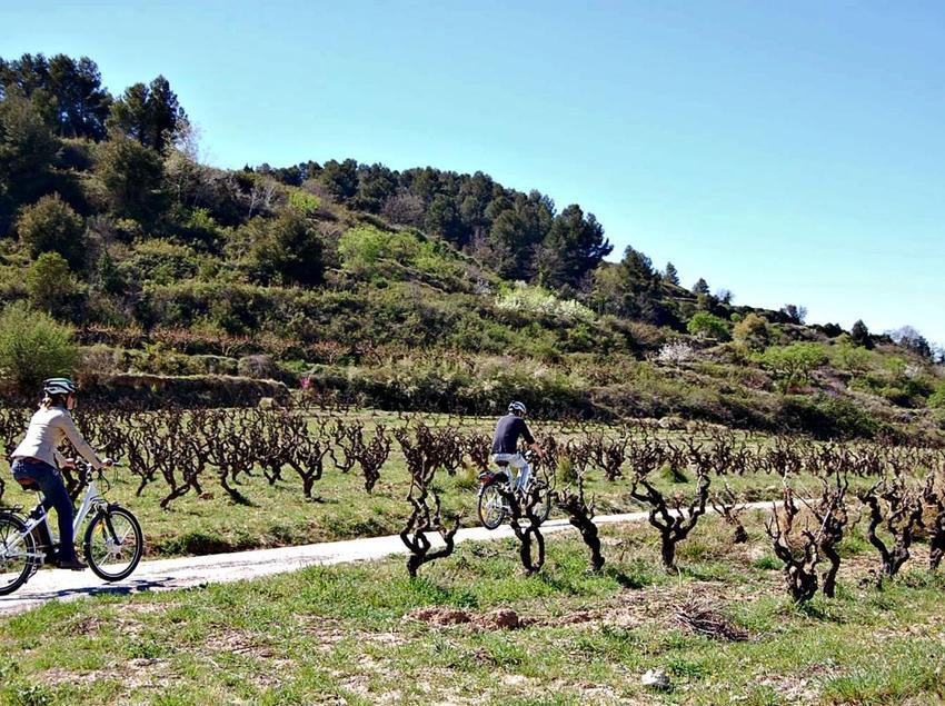 Ruta La primavera del cava: passejant entre vinyes