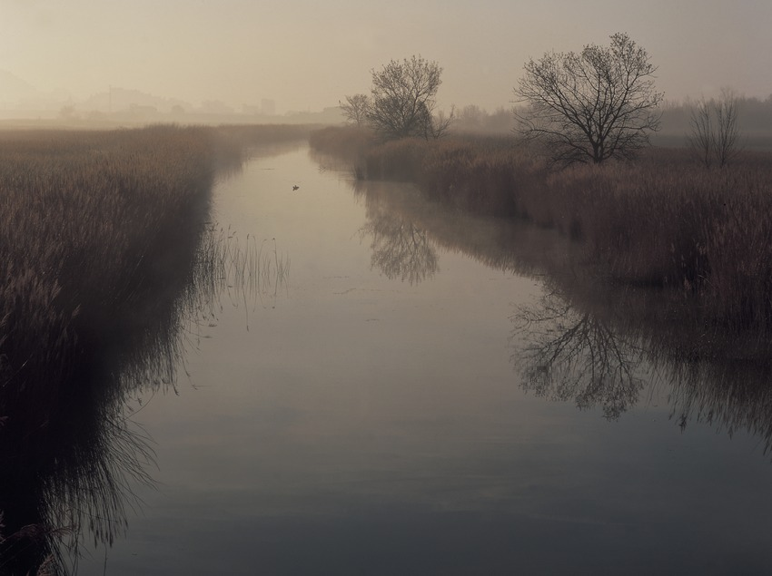 Canal al Parc Natural dels Aiguamolls de l'Empordà.  (Kim Castells)
