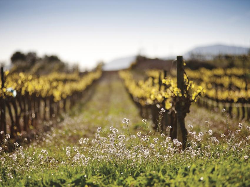 Vinyes de Gramona