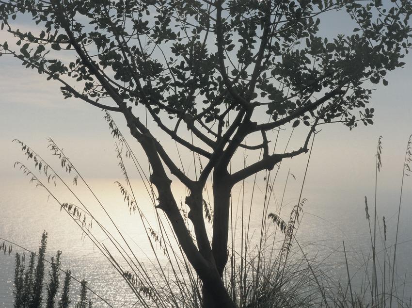 La Morella, dans le parc naturel de Garraf.  (Kim Castells)