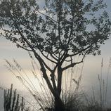 La Morella, en el Parque Natural del Garraf. (Kim Castells)
