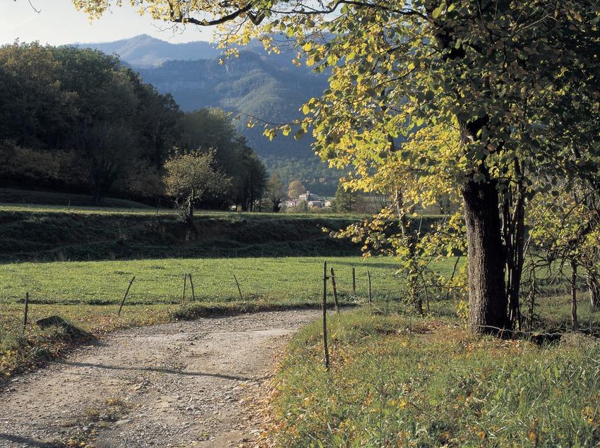 Road near Els Hostalets d'en Bas