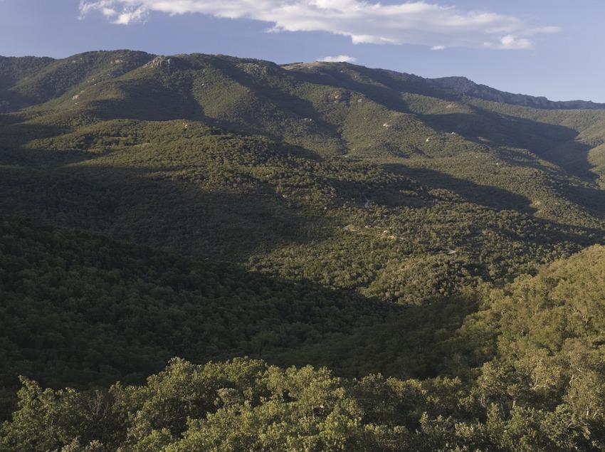 Serra de l'Albera mountains  (Nano Cañas)
