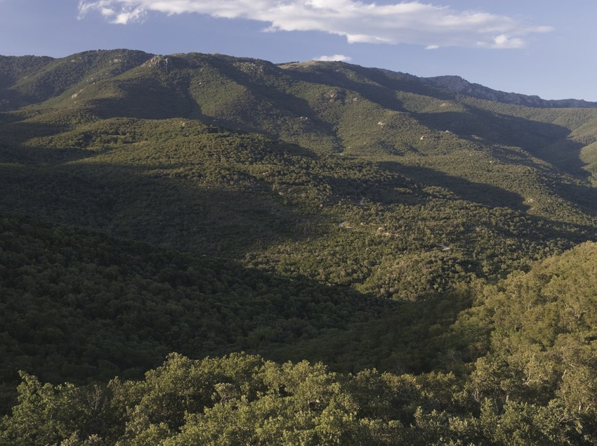Sierra de la Albera.  (Nano Cañas)