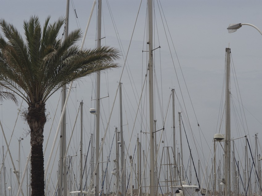 Palm tree and masts of yachts moored in the port of Vilanova i la Geltrú  (Marc Ripol)