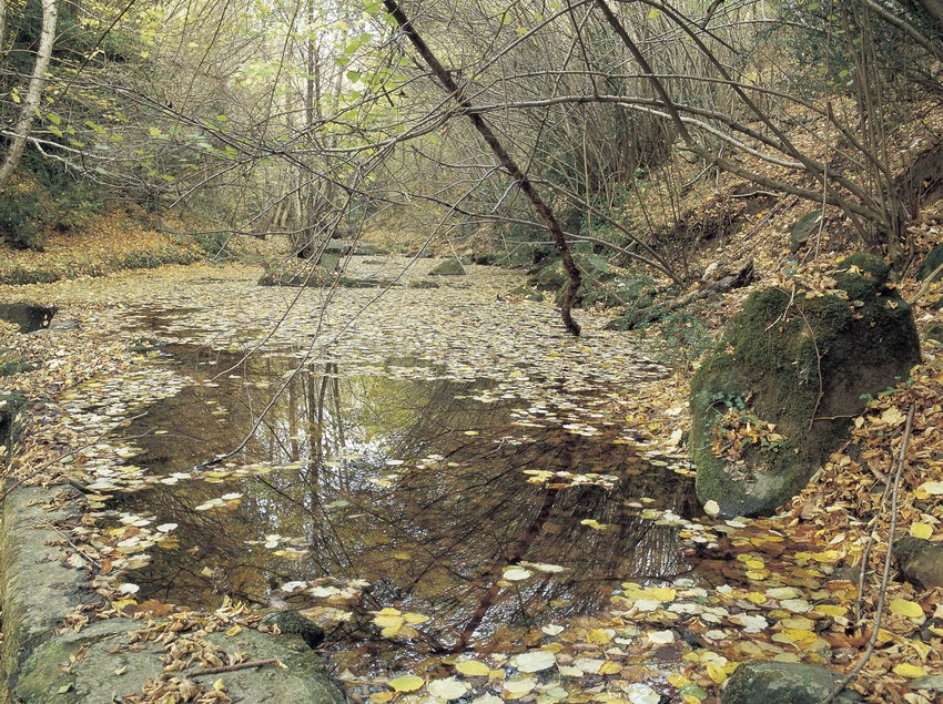 Stream near Sant Iscle de Colltort  (Kim Castells)