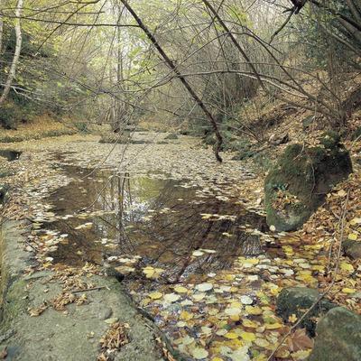 Rierol prop de Sant Iscle de Colltort.  (Kim Castells)