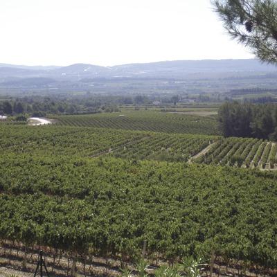 Vinyes  (Consorci de Promoció Turística de l'Alt Penedès)