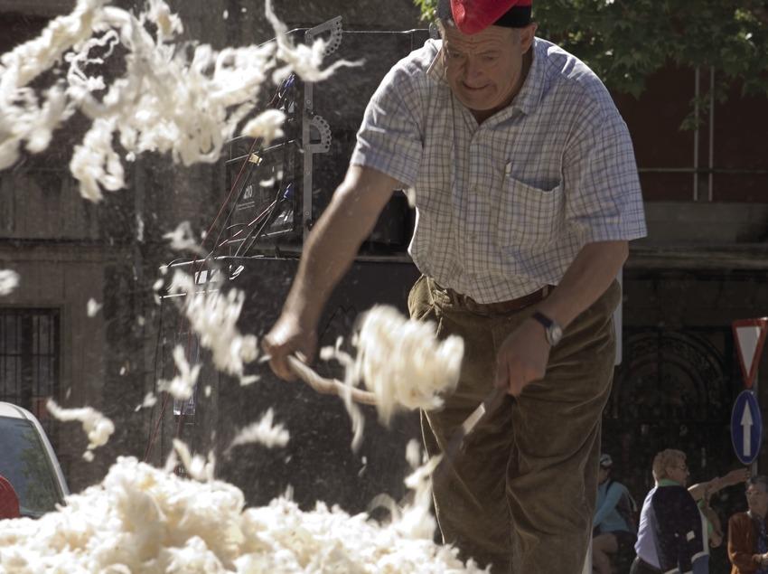 Concurs d'esquilada d'ovelles durant la Festa de la Llana i del Casament a Pagès.  (Oriol Llauradó)