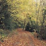 Path near Salarsa