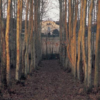Bosque de chopos.  (Kim Castells)