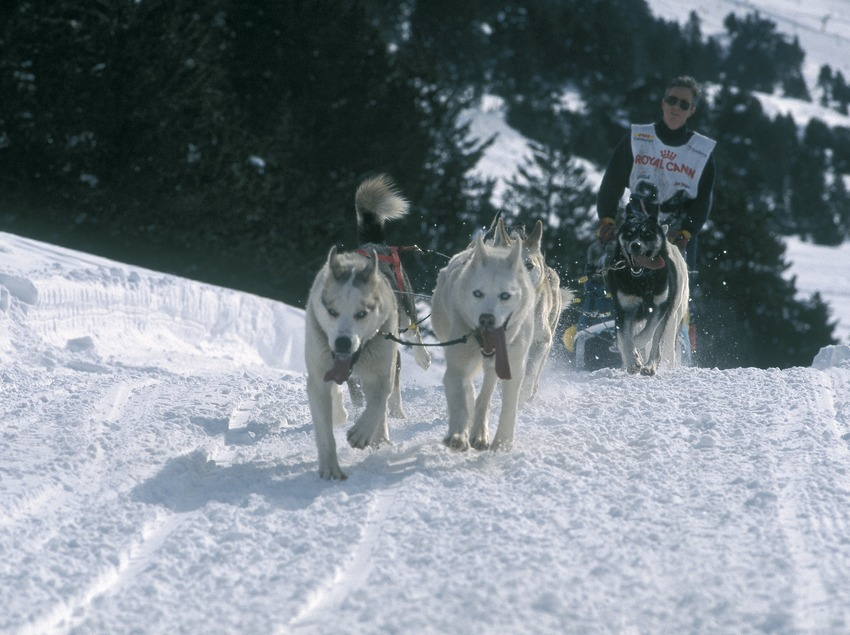 Dog sledging.  Mushing. Port Ainé.