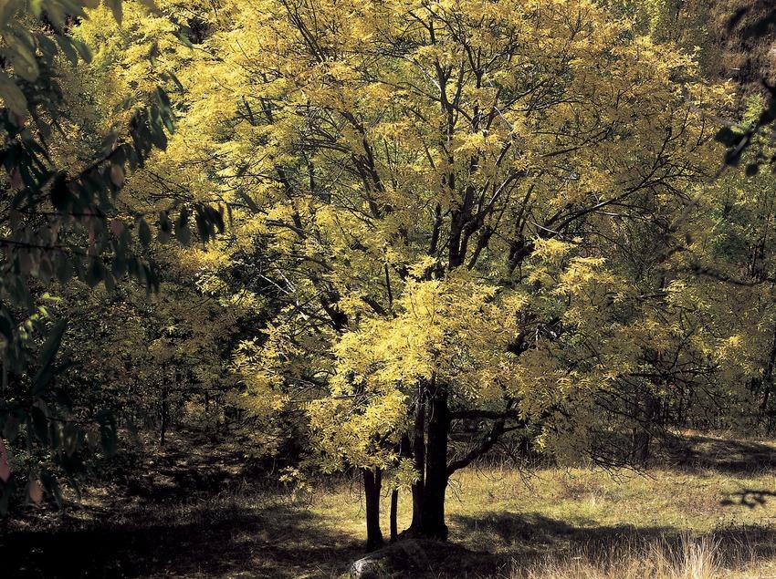 Paisaje pirenaico cerca de la presa de Cavallers  (Kim Castells)