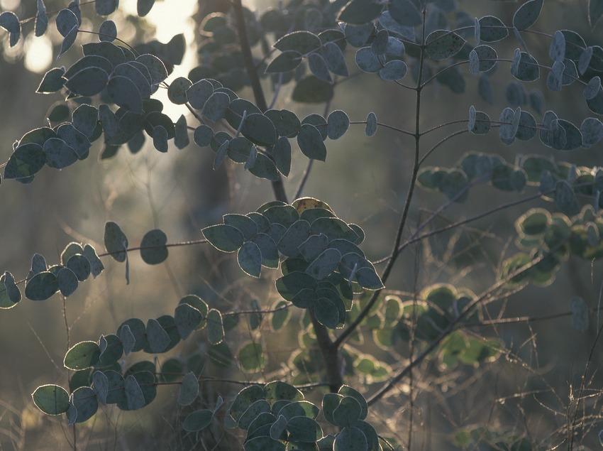 Frosty landscape. Plains of Vic.  (Daniel Julián)