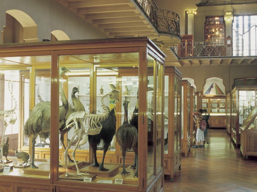 Sala de l'antic Museu de Zoologia, al Castell dels Tres Dragons.  (Imagen M.A.S.)