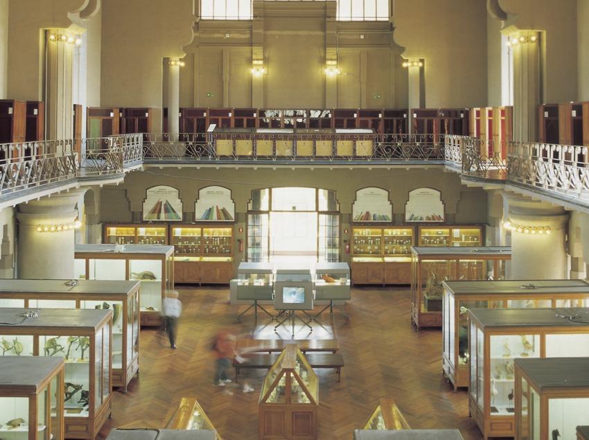 Sala del antiguo Museo de Zoología, en el Castillo de los Tres Dragones.  (Imagen M.A.S.)